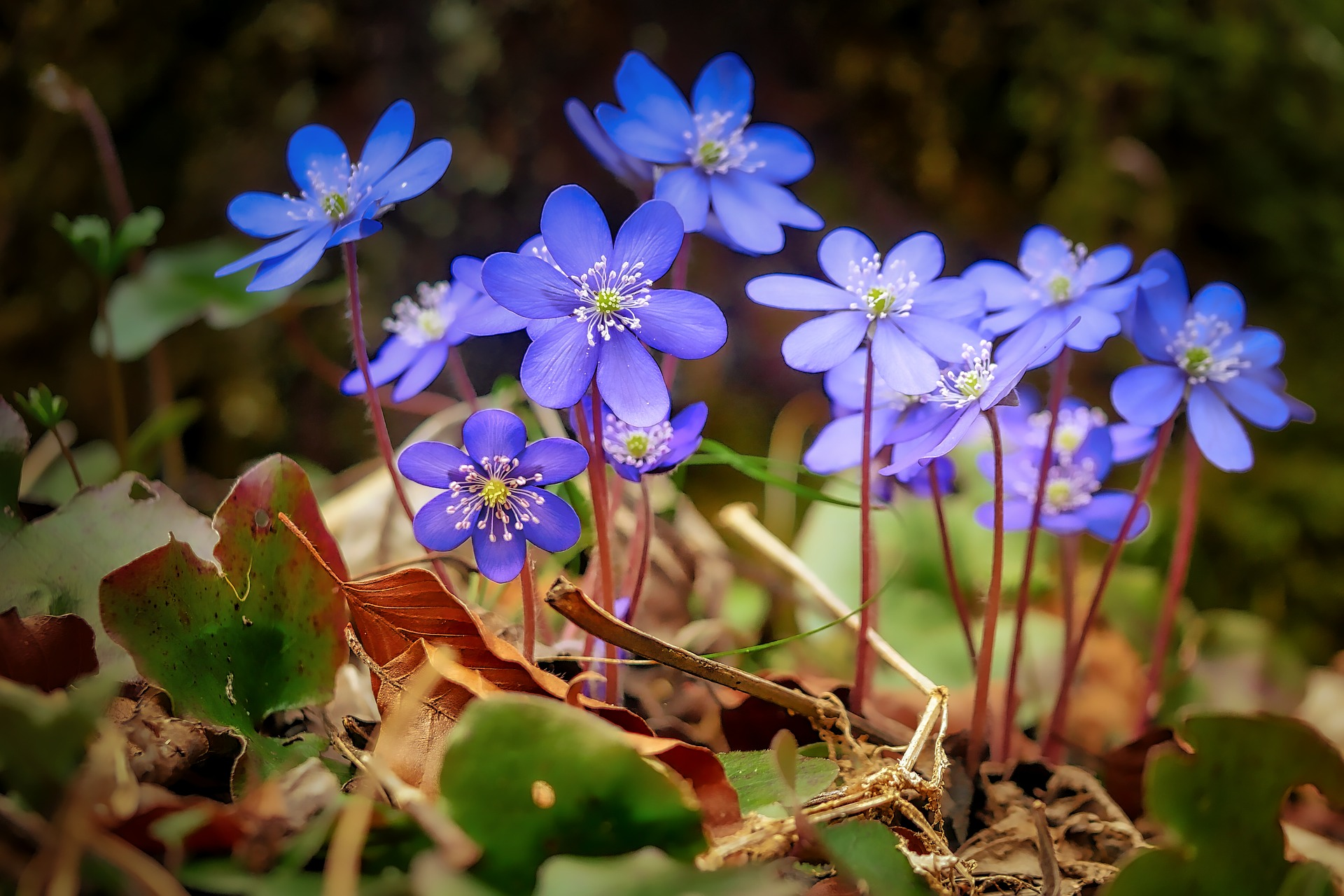 Little blue flowers growing in the forest